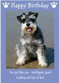 "Miniature Schnauzer-Happy Birthday - ""I'm Just Like You"" Theme"